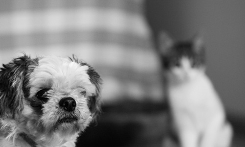 Cat Or Dog? Which Pet You Should Keep?