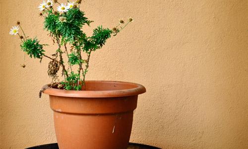 Top 7 Indoor Plants