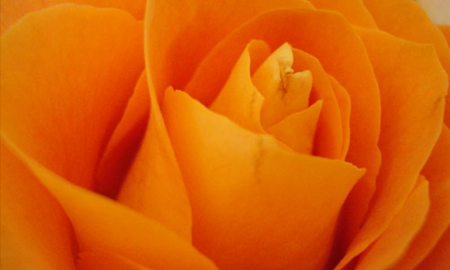 Orange:Zest