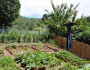 Follow These Great Tips To Keep Your Vegetable Garden Flourishing
