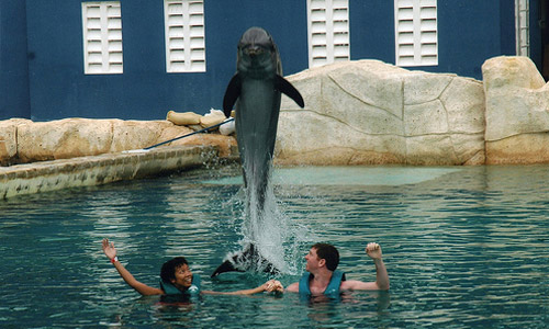 Dive with dolphins