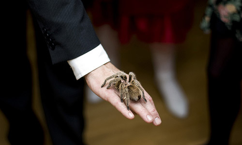 Keeping tarantulas as pets
