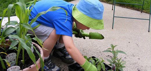 12 Great Garden Care Tips