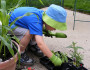 12 Great Garden Care Tips