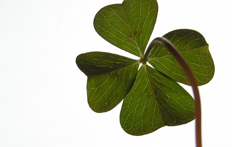 2. Shamrock or four leafed clover