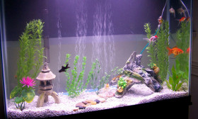 3 Interesting Things to Add to Your Aquarium