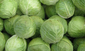 6 Benefits of Cabbage