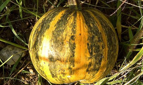 6 Benefits of Pumpkin Seed Oil