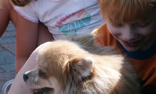 5 Tips to Get Your Child Ready for a Pet