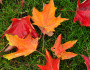8 Things We Love about Fall