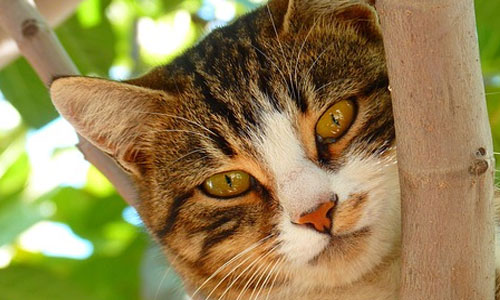 Common Myths About Cats to Know