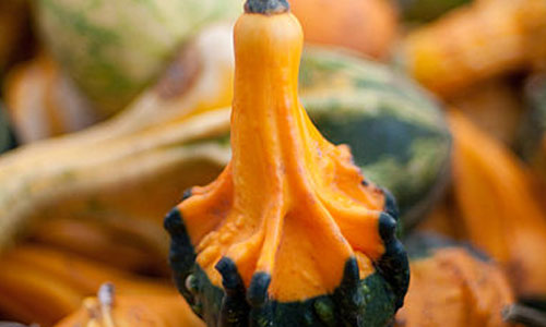 9 Health Benefits of Squash