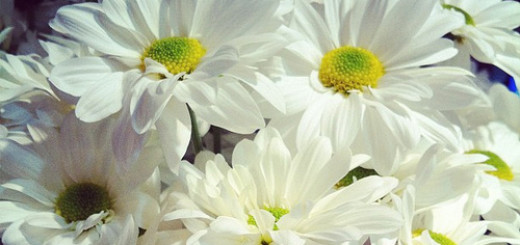6 Fun Facts About The April Birth Flower