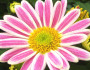 6 Fun Facts About the November Birth Flower