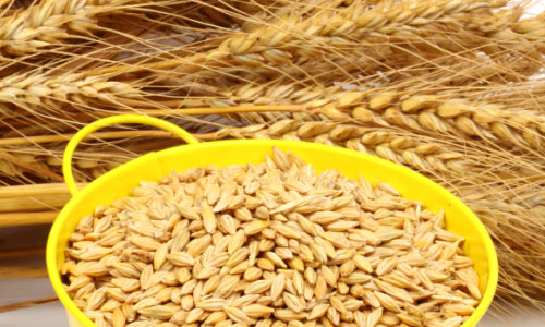 6 Health Benefits of Barley