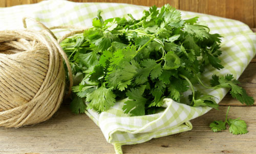 10 Health Benefits of Cilantro