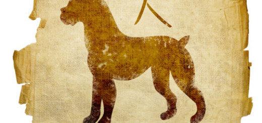 Things-to-know-about-the-Chinese-Zodiac-Sign-Dog