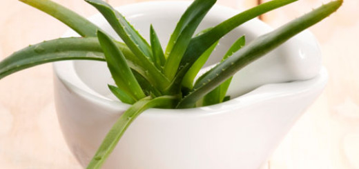 best-houseplants-to-purify-the-air