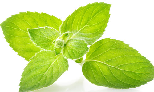 5 Health Benefits of Mint Leaves