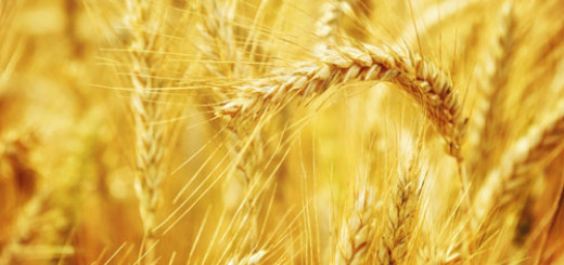health-benefits-of-whole-grain