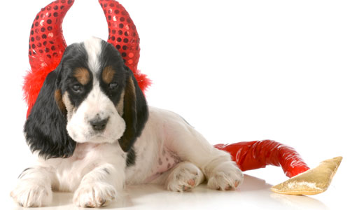 5 Silly Halloween Costume Ideas for Pets