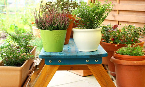 5 Tips for Terrace Gardening