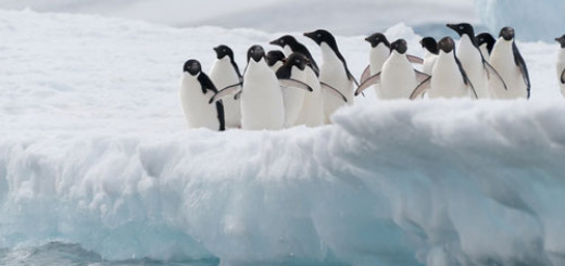 top-xx-reasons-to-visit-Antarctica