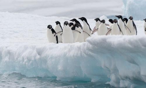 Top 6 Reasons to Visit Antarctica