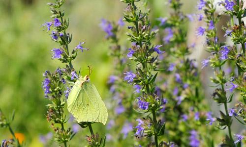 6 Health Benefits of Alfalfa