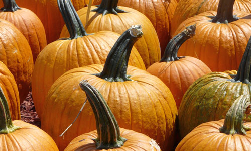 7 Health Benefits of Pumpkin