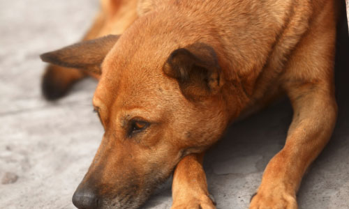 Facts that Makes us Feel Sad About Sochi Stray Dogs