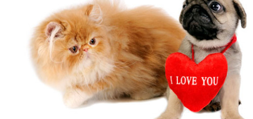 reasons-why-you-must-not-gift-a-pet-for-Valentine's-Day