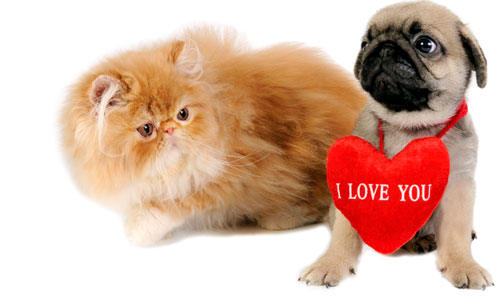 Reasons Why You must not Gift a Pet for Valentine's Day