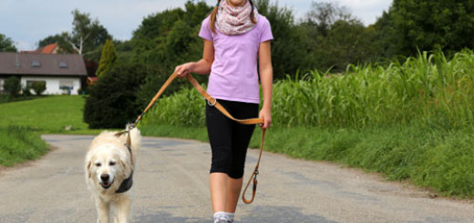 ways-to-make-your-pet-dog-happy