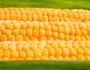 Sweet corn: