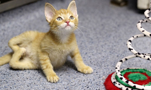 Facts to Know About Stockings the Kitten