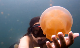 A Girl Snorkeled with Jellyfish. Her Video Will Blow Your Mind Away.