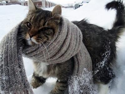 Brrr...it's-cold