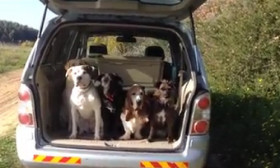 Watch Five Well-Behaved Dogs Get Out Of The Car Very Politely Only When Their Owner Calls Them