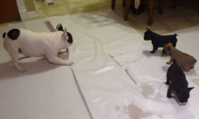 A French Bulldog Teaches His 6 Week Old Puppies Important Tricks For Life