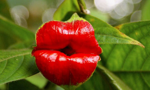 Hookers-Lips