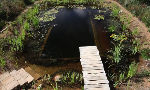 how to make a pond out of a swimming pool