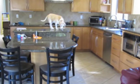 Lucy, The Clever Dog Opens Hot Oven And Steals Some Chicken Nuggets