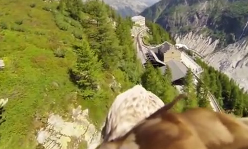 Watch Mindblowing Footage From a Camera on the Top of an Eagle