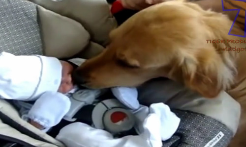The Cutest Moments Happen When Pet Cats and Dogs Meet Babies For The First Time.
