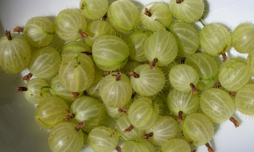 7 Benefits of Gooseberry Juice for Skin