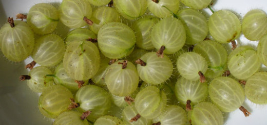 5 Health Benefits of Gooseberry