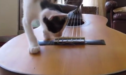 These Kittens Check Out A Guitar For The First Time And Fight Over It