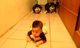A Baby Starts Crawling With Two Dogs Behind It. You Cannot Imagine What The Dogs Do Next.