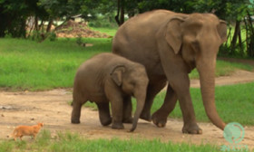 A Cute Encounter Between A Baby Elephant And A Cat